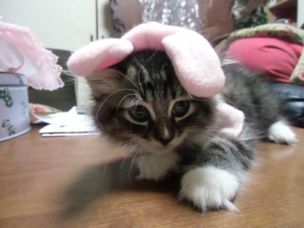 まねき猫スタッフ