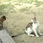 犬猿の仲ならぬ猫猿の仲!?猫と猿の仲良し動画3選
