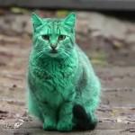 【動画まとめ】こんな猫ちゃん見たことない!メディアに取り上げられた猫