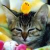 猫回虫の予防と対策。室内飼いでも油断は禁物